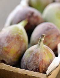 Figs Growing Fruit Ripe Plant Root
