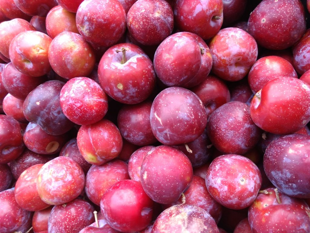 plum tree diseases and pests