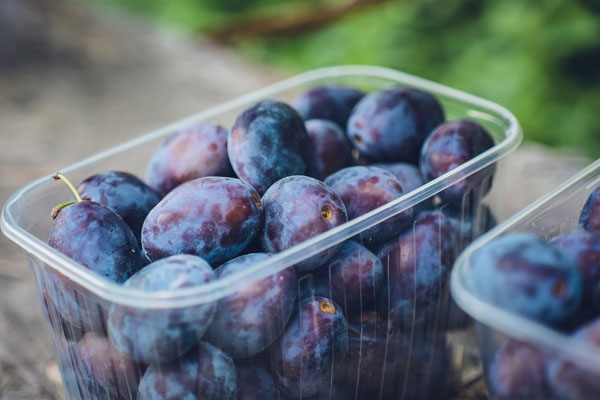 plum aphids - a punnet of plums