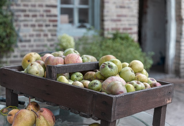 freshly harvested pears piled on a bench in a courtyard.