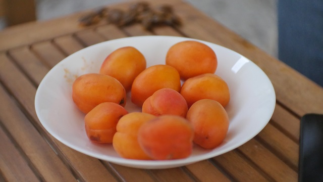 An apricot glut waiting to be used up