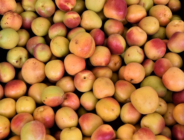 A pile of apricots waiting to be frozen